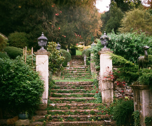 vintage, garden, and nature image