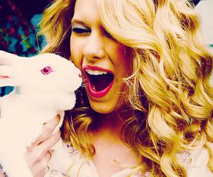 Taylor Swift, rabbit, and beautiful image