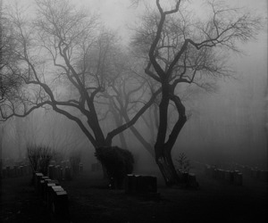 Darkness, nature, and black and white image