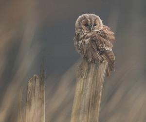 owl and animal image