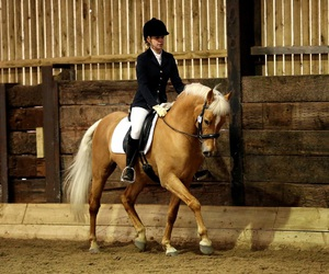 dressage, equestrian, and pony image