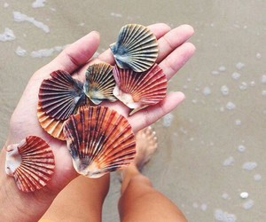 colors, sea, and shell image