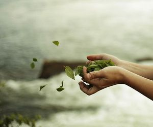 hands, leaves, and nature image
