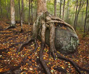 tree, funny, and nature image