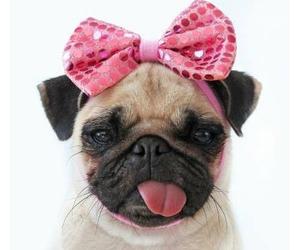 dog, pink, and pug image