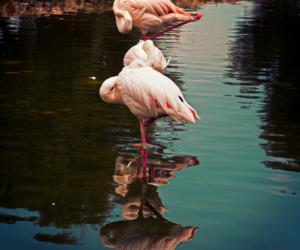 animal, blue, and flamingo image