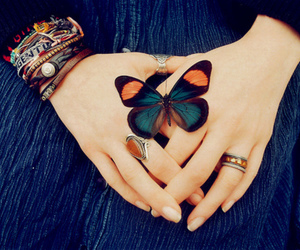 butterfly, nature, and pretty image