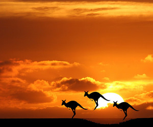 animal, australia, and beautiful image