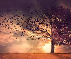 tree and birds image