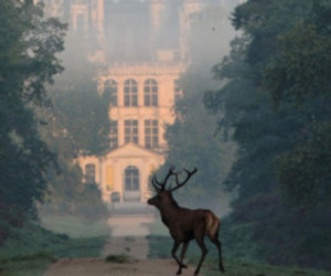 deer, castle, and france image
