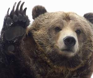 bears and cute animals image