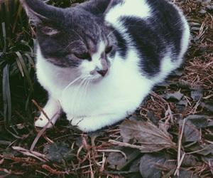 cat, dark, and fall image