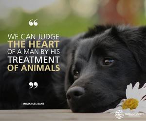 true, animal care, and door to man's heart image