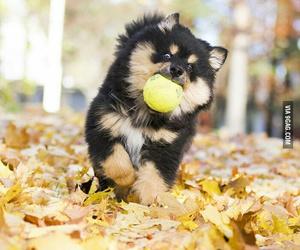 animal, autumn, and ball image