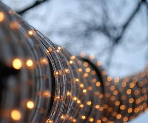 light, tree, and beautiful image