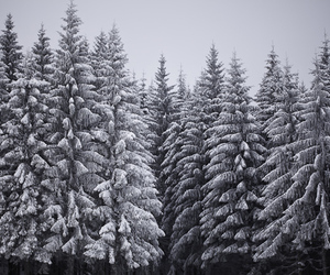 black and white, forest, and germany image