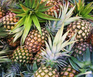 beach, cool, and pineapple image