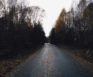 autumn, cold, and nature image