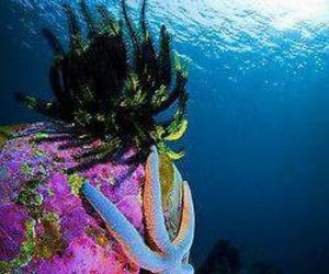 life, underwater, and ocean image