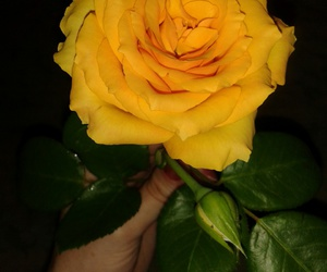 flowers, my mallow, and yellow roses image