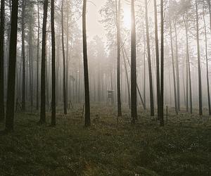 forest, landscape, and light image