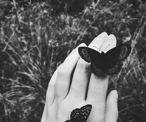 butterfly, black and white, and hand image