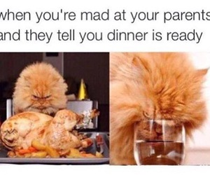 angry, cat, and mad image