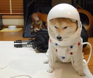 dog, space, and woof image