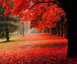 red, autumn, and landscape image
