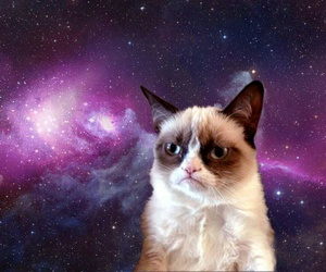 cat, grumpy cat, and space image