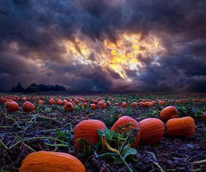 nature, photography, and Halloween image