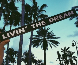 Dream and palm trees image