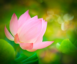 flower, macro photography, and pink image