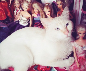 barbie, cat, and funny image