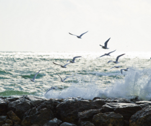 blue, breeze, and landscape image