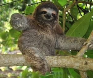 sloth image