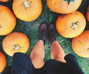 pumpkin, fall, and autumn image