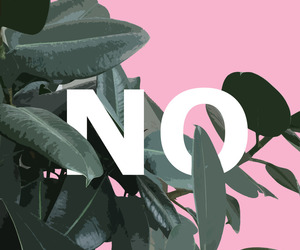 no and pink image