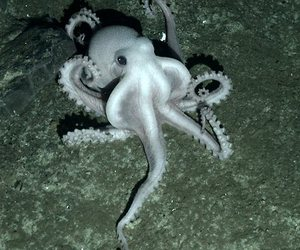 octopus and water image