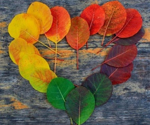 leaves, autumn, and heart image