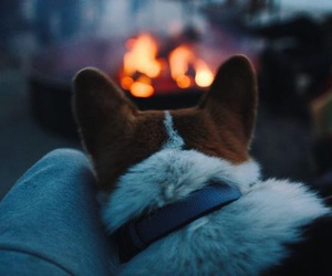 dog, autumn, and fire image