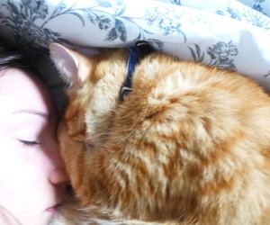 animal, chat, and cuddle image