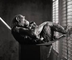 animal, human, and please image