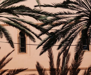 palms, pink, and plants image
