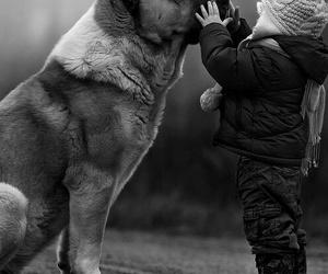 dog, animal, and child image