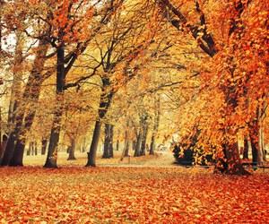 amazing, warm, and autumn image