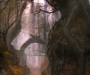 forest, autumn, and fall image