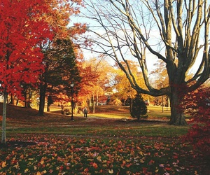 autumn, fall leaves, and park image