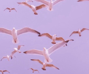 bird, pink, and pastel image