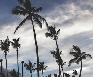 sky, palm trees, and palms image